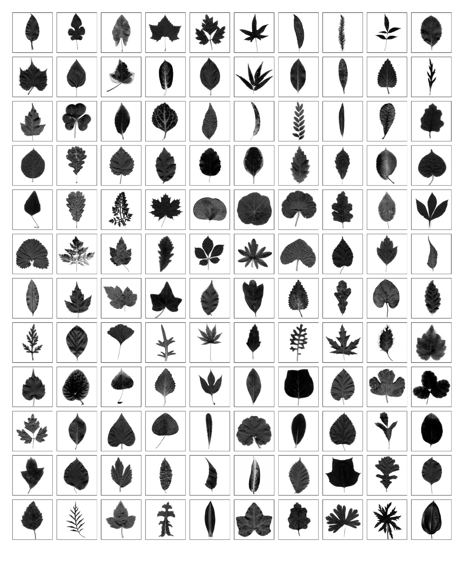 Examples of different kinds of leaves