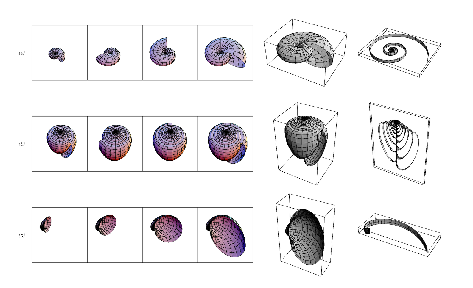 Model for the growth of mollusc shells
