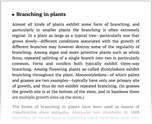 Branching in plants